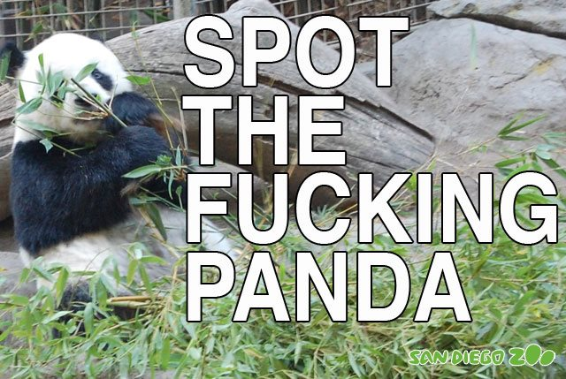 Delphon the Panda