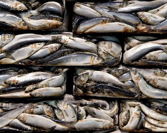 sardine-cannery